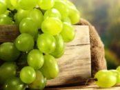 Підживлення винограду навесні та восени - чим і як удобрювати