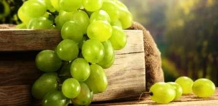 Підгодівля винограду: