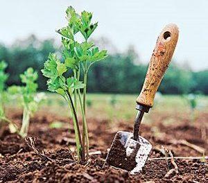 Весняне удобрення для саду та городу: які добрива вносити для гарного врожаю?