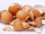 Як використовувати шкаралупу яєць для добрива