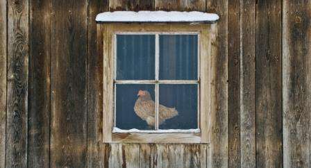 Як зробити зимовий курятник своїми руками: Фото та креслення курника