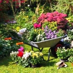 Клумби і квітники на дачі: з чого почати