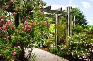 квітники та клумби біля будинку своїми руками фото