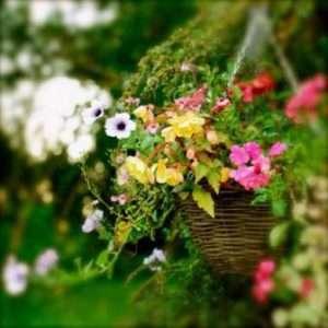 квітники та клумби з фото