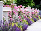 Що посадити уздовж забору на дачі: ТОП рослин для посадки вздовж паркану