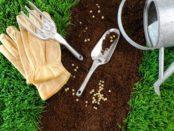 Як посадити газон насінням: корисні рекомендації і відео