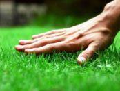 Газонна трава, яка знищує бур'яни на ділянці