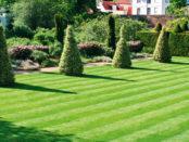 Як правильно посіяти газонну траву своїми руками