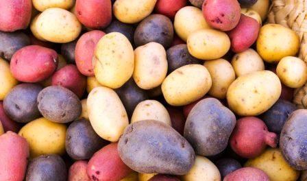 кольорова картопля