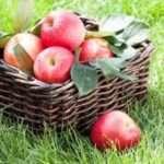 Як зберігати яблука на зиму в домашніх умовах свіжими всю зиму