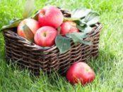 Як зберігати яблука на зиму в домашніх умовах