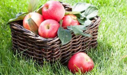 як зберегти яблука