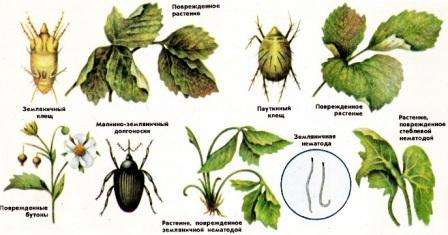 hvoroby-i-shkidnyky-polunytsi-4