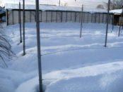 Підготовка винограду до зими: Обрізка і укриття виноградної лози