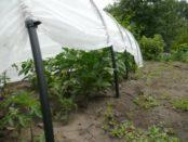 Який покривний матеріал можна використовувати взимку для рослин?