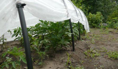Який покривний матеріал можна використовувати взимку для рослин