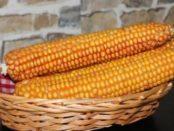 Консервована кукурудза на зиму - покрокові рецепти з фото