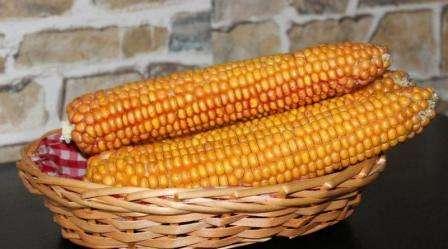 Консервована кукурудза на зиму