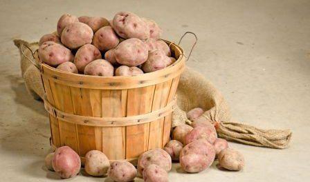 Де і як правильно зберігати картоплю на зиму в квартирі та на дачі. Особливості зберігання картоплі в погребі взимку