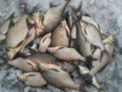 Риболовля в лютому – яка риба ловиться зимою