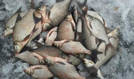 Риболовля в лютому