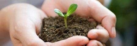 Посів ранньої капусти на розсаду і в ґрунт за місячним календарем 2018 року