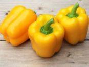 Найкращі сорти жовтого перцю для посадки