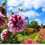 Коли в 2018 році посадити квіти на розсаду за місячним календарем