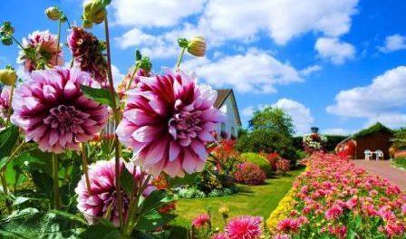 Коли садити квіти на розсаду в 2018 році за місячним календарем - основні рекомендації по вирощуванню квітів