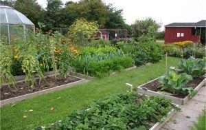 Майбутні роботи в саду і на городі в серпні 2018