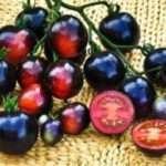 Найкращі сорти чорних помідорів та їх особливості вирощування у відкритому грунті
