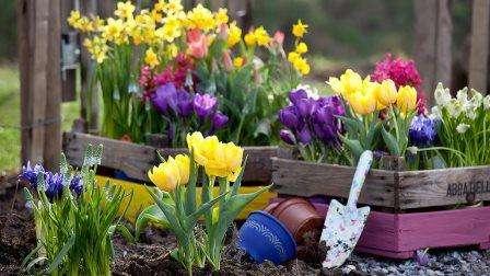 Квітникарство - вирощування садових квітів та догляд за квітами в домашніх умовах