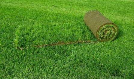 Основні види газону: Звичайний, Партерний (англійський) газон, Мавританський, Спортивний та Рулонний