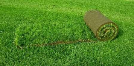 Фото: Рулонний газон