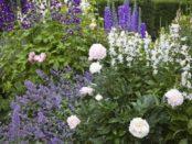 Червневі роботи з облаштування клумб та квітників на дачі: Як облаштувати клумбу на дачі своїми руками
