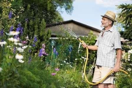 Догляд за багаторічними квітами в червні
