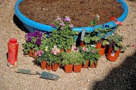 Посадка багаторічних рослин у відкритий грунт