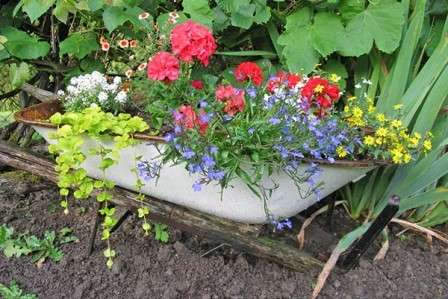 коли висаджувати квіти у червні