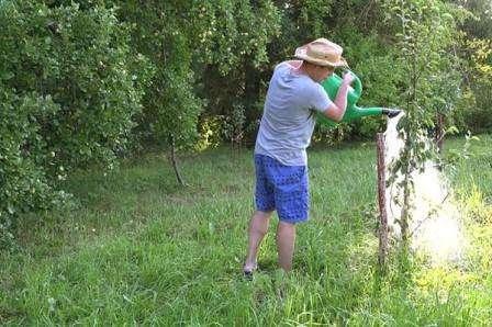 Догляд за плодовими деревами та чагарниками в червні
