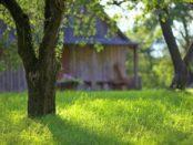 Дачний календар: садові роботи в червні на дачі за місячним календарем