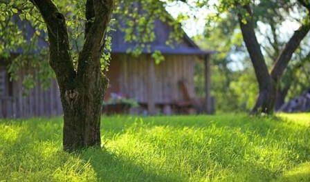 Садові роботи в червні для дачників - календар садово-городніх робіт на червень місяць