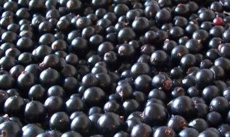 Чорна смородина, протерта з цукром - покроковий рецепт з фото на зиму