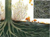 Симбіоз грибів з рослинами і іншими організмами у природньому середовищі