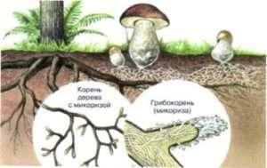 Симбіоз грибів з комахами
