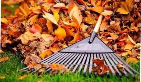 Місячний календар на листопад 2018 - осінні роботи в саду і на городі