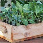 Як зробити ємність для вирощування розсади в домашніх умовах
