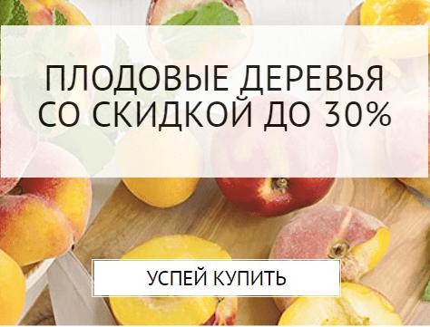 Обрізка абрикосу: Як правильно обрізати молодий абрикос